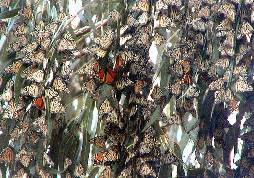 Butterflies parked
