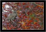 newley fledged.jpg