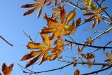 feuilles.jpg