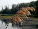 Marsh Sentinel - Vic Cooke