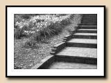 Stair Patterns