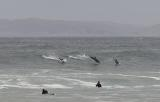 Dolphins show how it's done