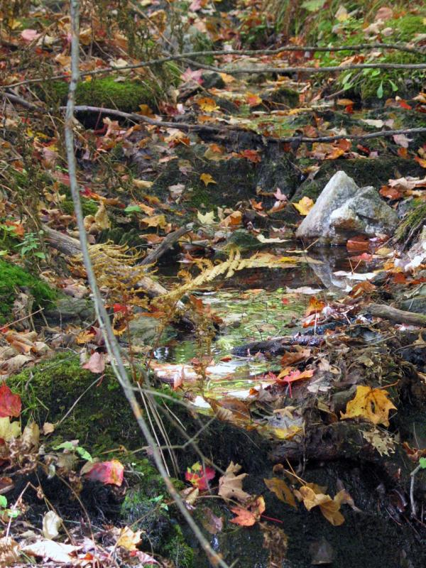 Streambed covered in leaves