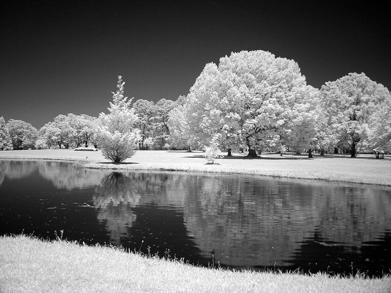 Brookgreen Gardens infrared 25