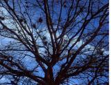 6x6 #5 TreeLimbs.jpg