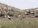 032 Storks.jpg
