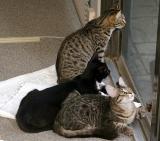 pussycat pics