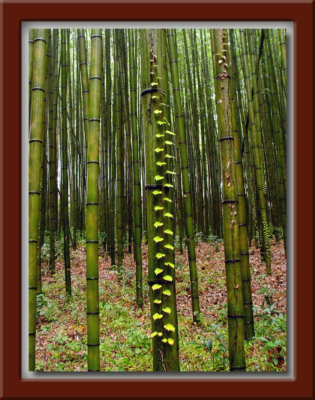 Bamboo w/Leaf Steps