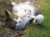 Stray cat soaking up some sun