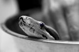 A Snake in the Bath II