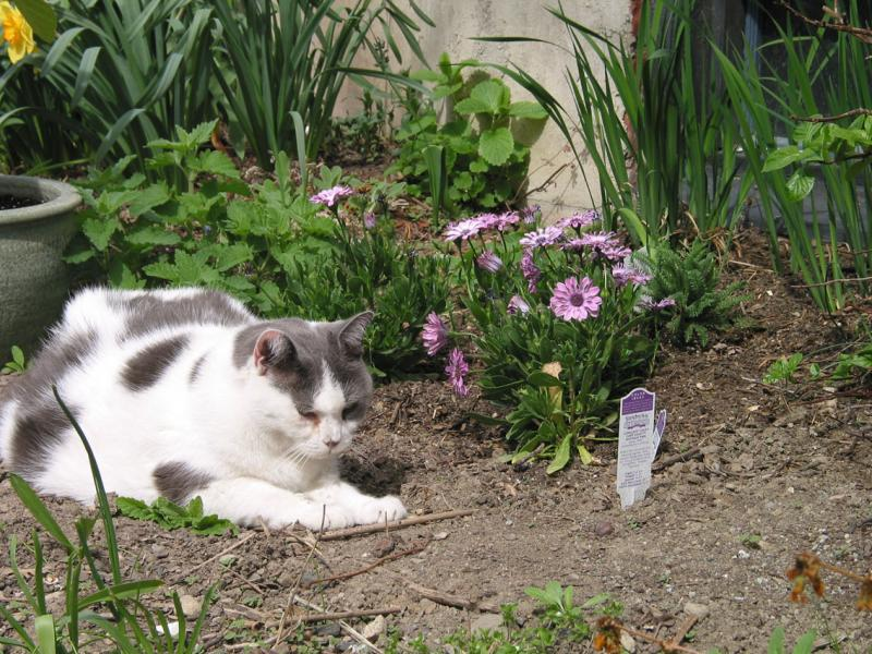 Van Loch in the catnip patch