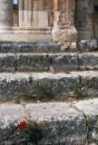 poppy on steps