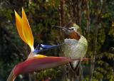Two Pretty Birds