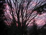 sunrise  -- Nov--23--2004