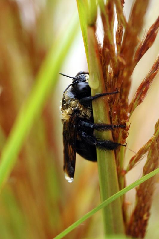 Bee-draggled iii.jpg