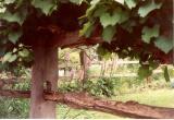 Old Salem Garden.jpg