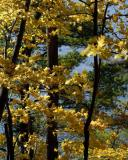 Yellow, Green, Blue of Fall