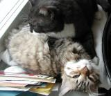 Nelli and Kryyni like each others.