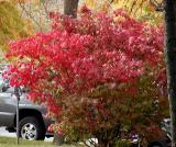 Shades of red and Greens.jpg(311)