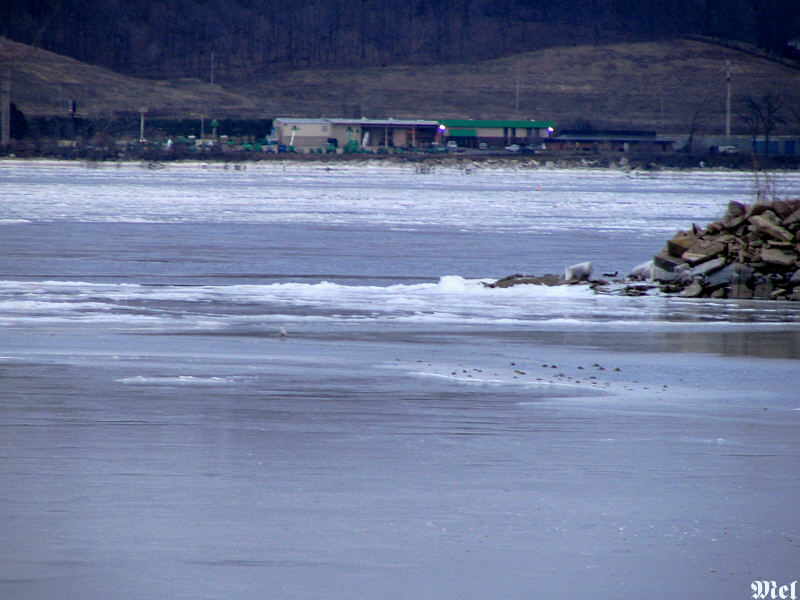 Ice build-up on the Illinois River.jpg(641)