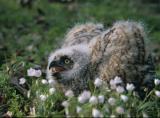 Owl Banding-2004-022.jpg