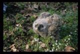 Owl Banding-2004-021.jpg