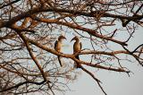 > Birds