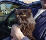 More Cats Arrive In Rescue