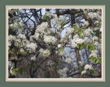 Flowers & Macros