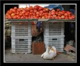 Tomatoes with Duck