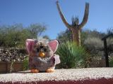 Furby at Rex Ranch