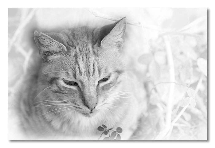 Iao Kitty