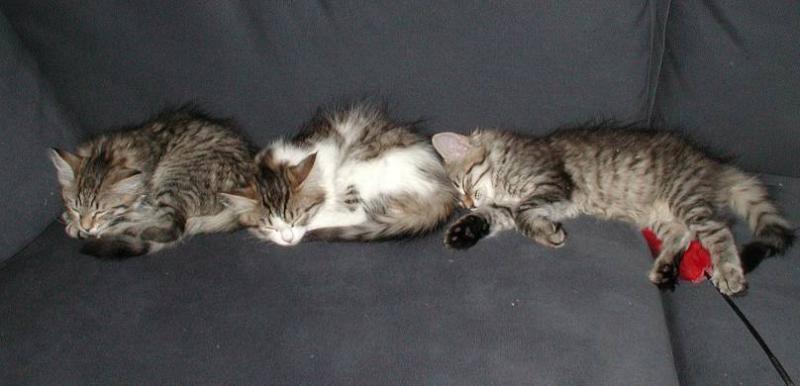 Three sleeping beauties