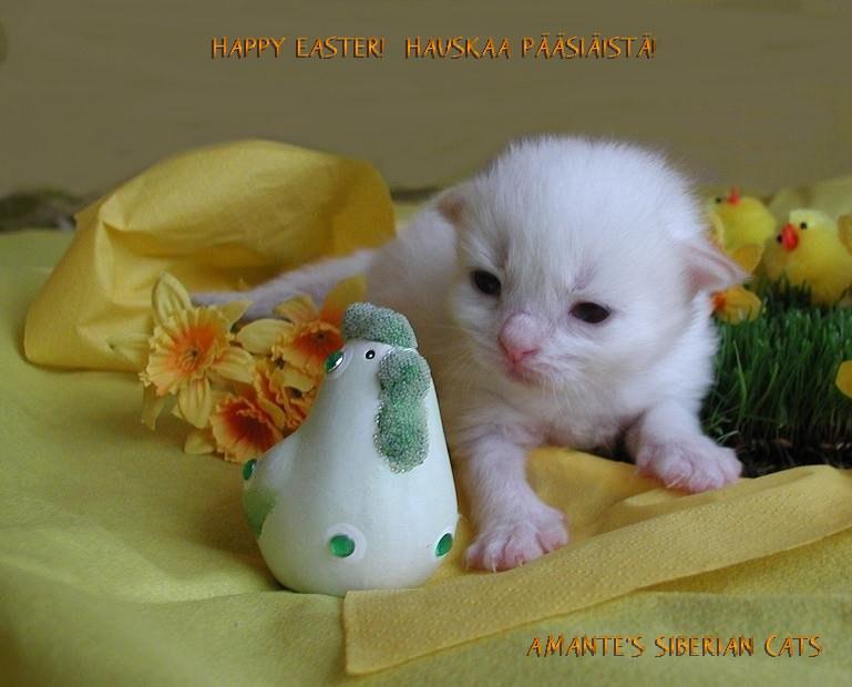 Hello, I am Nasu and I wish you a Happy Easter