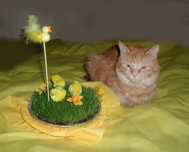 Glad Påsk!!
