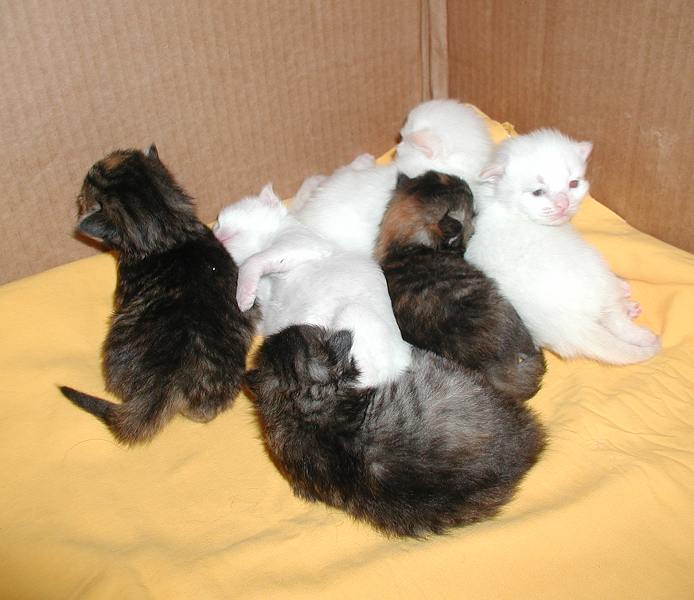 Kittens almost two weeks old.