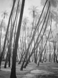 Kapuaina Coconut Groveby kudbegud