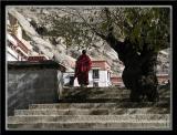 Sera Monastery 5