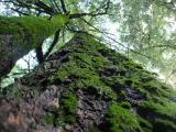 Evil Moss Trees