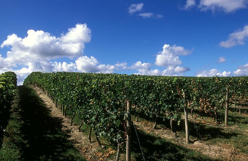 Vineyard near Ordonnac