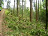 Logging at the bottom of South Tiger Traverse