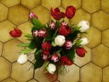 my tulips.jpg
