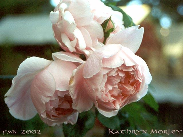Kathryn Morley