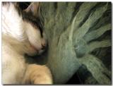 chat qui rêve