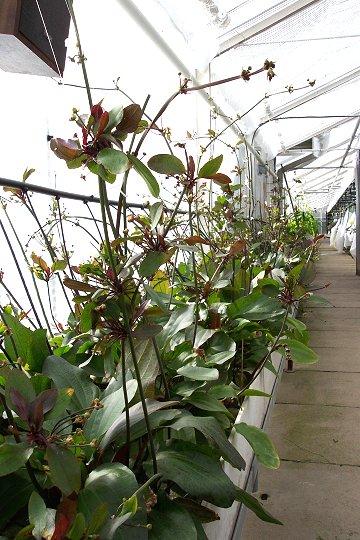 Tropica Aquarium Plants Denmark