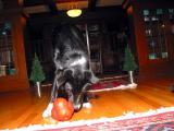 Scout gives two paws up to the Molecule Ball