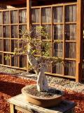 Zen Garden at Balboa Park