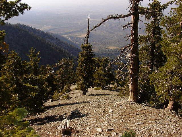 Northwest Ridge of Mount Williamson