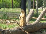Wyandot Lake/Columbus Zoo 2004