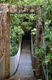 Bridge in Rain Forest